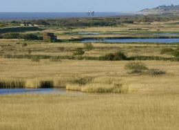 Minsmere's reedbeds