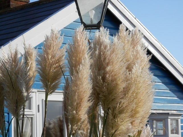 Pampas grass in front of Mandalay