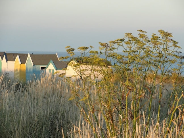 "Fading marram grass and cow parsley against the ""Royal"" beach huts by Gun Hill"